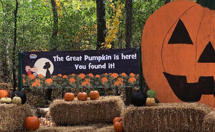 Great Pumpkin Hunt